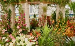 Barbados Strikes Gold for the 20th Time  at the RHS Chelsea Flower Show 2019